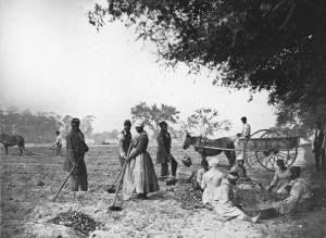 800px-James_Hopkinsons_Plantation_Slaves_Planting_Sweet_Potatoes-300x219